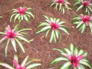 Bromeliads 006