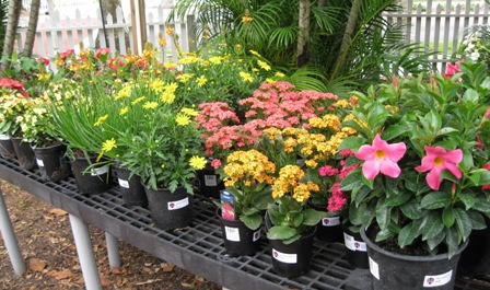 How to quickly add some color to your garden edison and ford we have bulbine a south african clumping perennial with orange and yellow flowers that is extremely drought tolerant choose from several colors of mightylinksfo