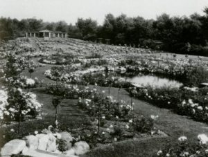 Clara Ford's extensive rose garden at Fair Lane, the year-round residence of the Ford family in Dearborn, Michigan.