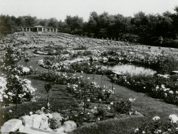 Rose garden at Fair Lane, the Fords' Michigan estate.