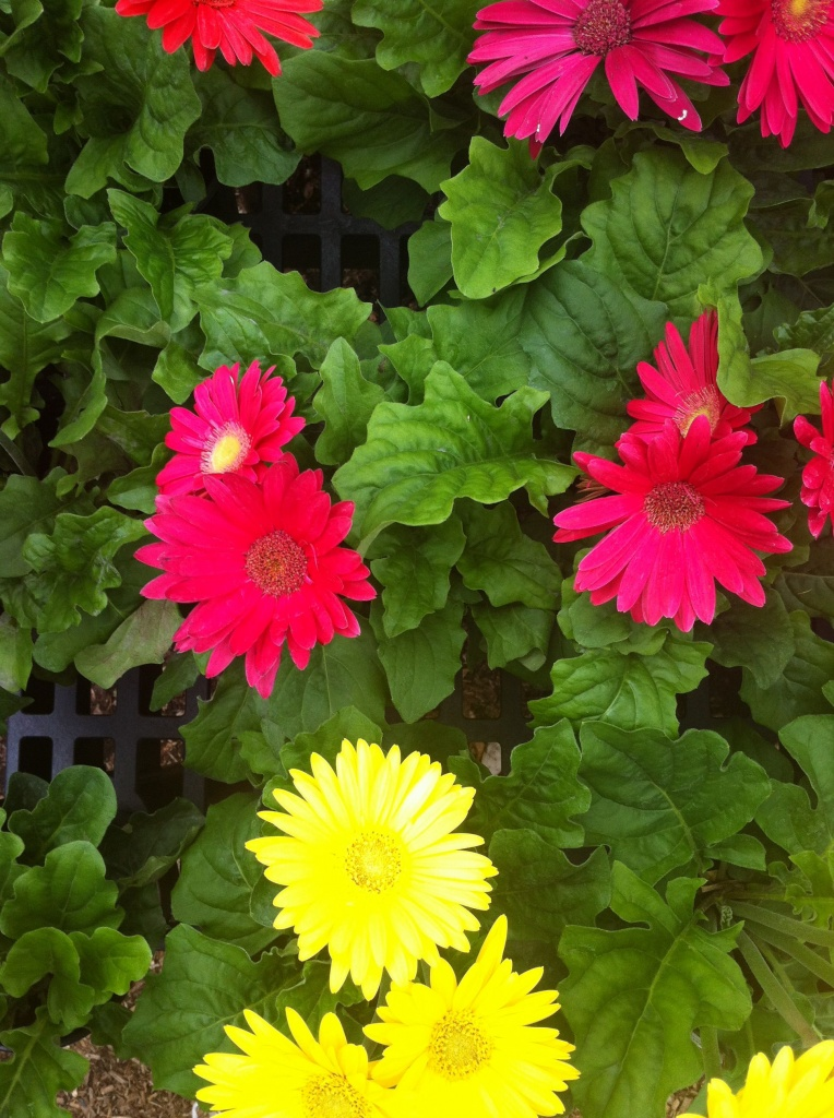 plantings for spring