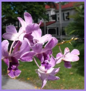 orchid sept 2014